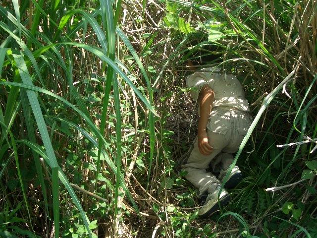 食べられる野草と飼いたい生きものさがし