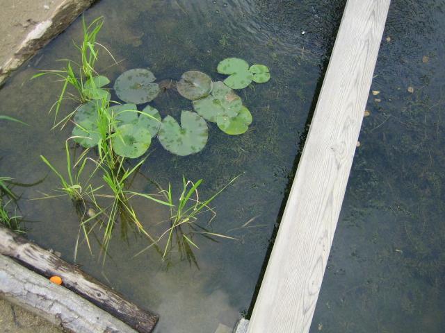夏休み  ~校庭の池~