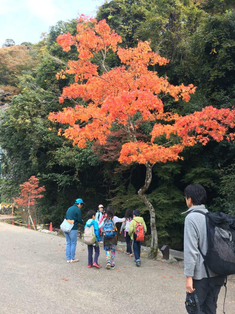 秋の箕面ハイキング!