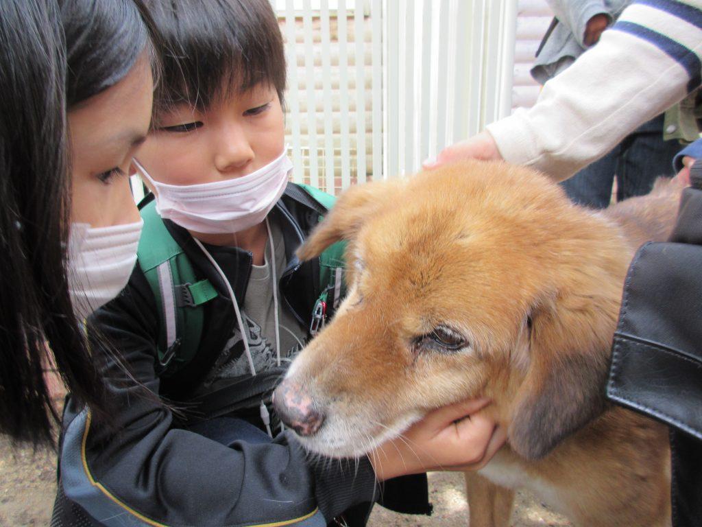 犬猫の孤児院「ハッピーハウス」に行ってきました!